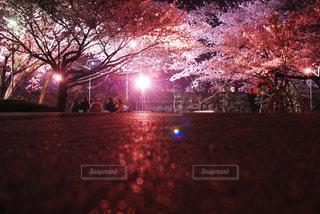 夜桜とお花見 - No.1178781