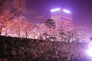 ピンクと紫 - No.1178785