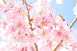 近くの花のアップの写真・画像素材[1836396]