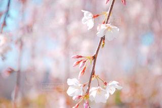 花のクローズアップの写真・画像素材[3113418]