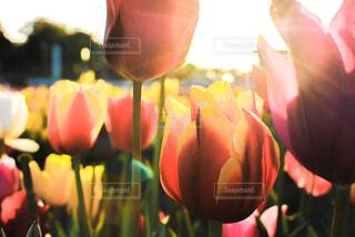 花のクローズアップの写真・画像素材[4602697]