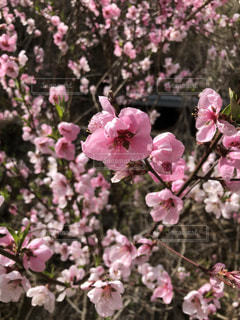 近くの植物にピンクの花のアップの写真・画像素材[1100308]