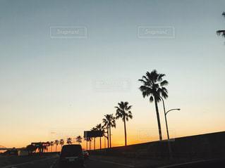 夕陽とヤシの木の写真・画像素材[1012100]