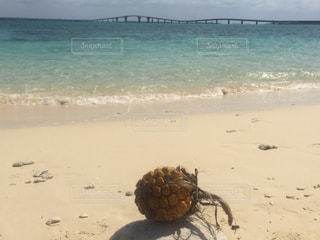 パイナップルの流れ着いた砂浜の写真・画像素材[1012301]