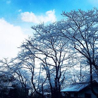 大きな木 - No.1012453