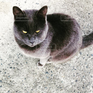 土の中に立っている猫の写真・画像素材[1012457]