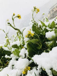 近くの花のアップ - No.1012461