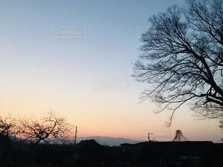 背景の夕日とツリー - No.1012476