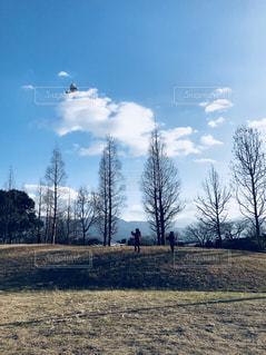 フィールドの真ん中の木 - No.1012502