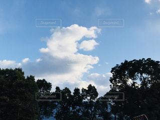 青い空の木 - No.1012504