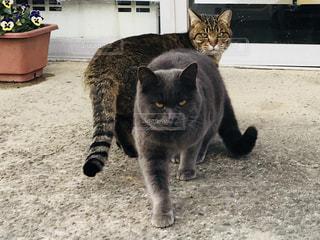 土の中に立っている猫 - No.1012506