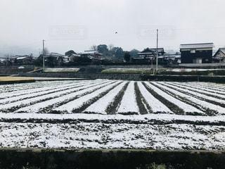 冬の畑 - No.1012507