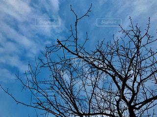 木の枝にとまった鳥の写真・画像素材[1019225]