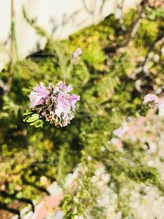 近くの花のアップの写真・画像素材[1020382]