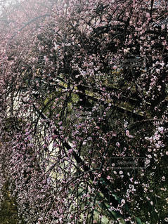 近くの木のアップの写真・画像素材[1024793]