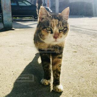 土の中に立っている猫 - No.1026027