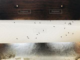 アリの群れがキッチンペーパーに立っています。の写真・画像素材[1026742]