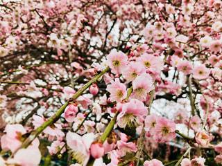 近くの花のアップ - No.1028009