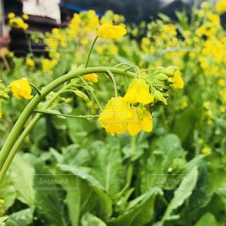 緑の葉と黄色の花 - No.1046275