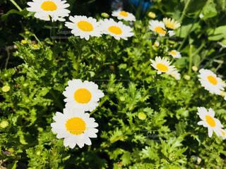 黄色の花 - No.1056301