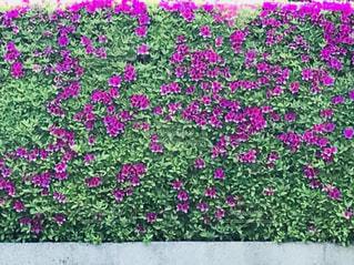 近くのフラワー ガーデンの写真・画像素材[1144994]