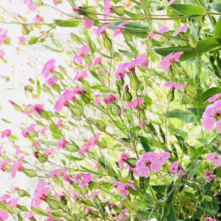 緑の葉とピンクの花 - No.1144995
