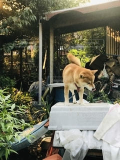 乗る犬の写真・画像素材[2480808]