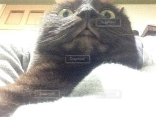 猫の写真・画像素材[33366]