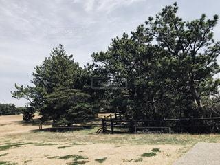 大きな木の写真・画像素材[1081971]