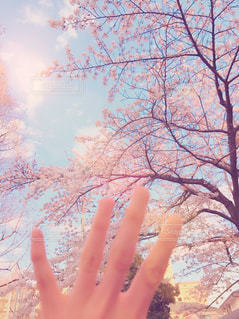 新しい春 - No.1012666