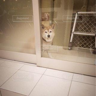 ひょっこり犬 - No.1012682