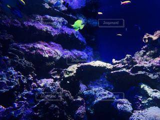 鮮やかな魚たち🐟の写真・画像素材[1014556]