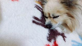いつの間にか寝てるの写真・画像素材[1020181]