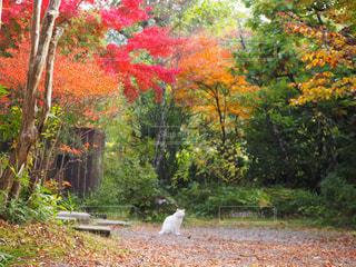紅葉に包まれるネコの写真・画像素材[1013188]