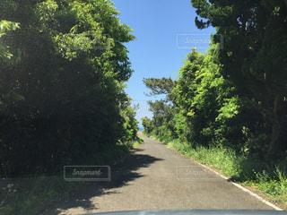 ドライブの写真・画像素材[1013328]