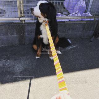 日向を嫌がる犬の写真・画像素材[1013446]