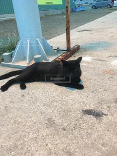 漁港に住まう猫7の写真・画像素材[1013890]