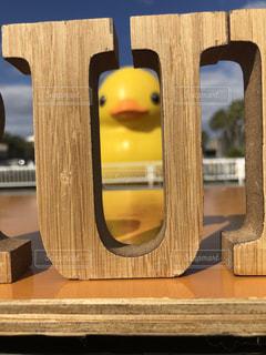 duckのuの間からの写真・画像素材[1013909]