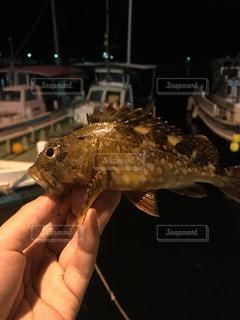 小島漁港にての写真・画像素材[1014177]