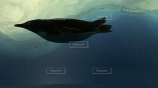 泳ぐペンギン - No.1089933