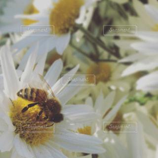 蜂と花の写真・画像素材[1014737]