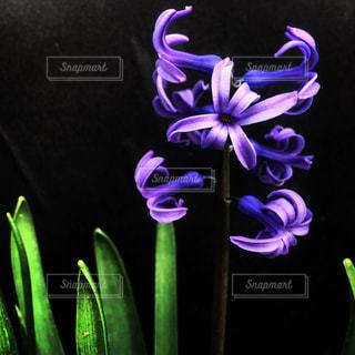 花の写真・画像素材[1114910]