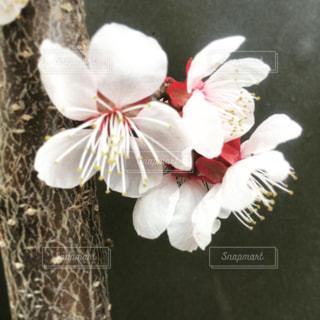近くの花のアップの写真・画像素材[1127043]