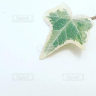 葉の写真・画像素材[1127045]