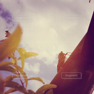 蝉の写真・画像素材[1346881]