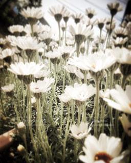 花の写真・画像素材[2012488]