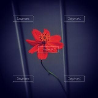 テーブルの上に座っている花の花瓶の写真・画像素材[3403539]