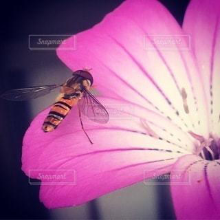植物の上のピンクの花の写真・画像素材[3403585]