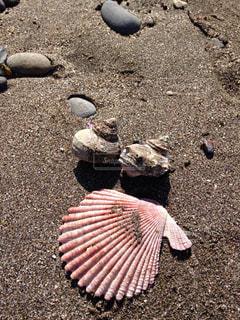 貝殻の写真・画像素材[1032604]