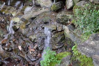 湧き水の写真・画像素材[1014569]